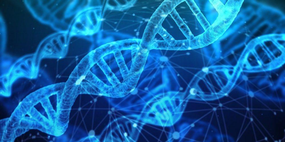 Unsere Mitgliedsgruppen: Das Gen-ethische Netzwerk